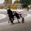 Gala der Amateure 2019 im Trabrennpark Krieau | Wien